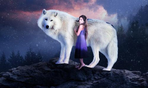 Девочка и волк. Свет и тень. Цветокоррекция
